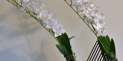 Winsome Windswept: ( white orchids in glass & black Holder)